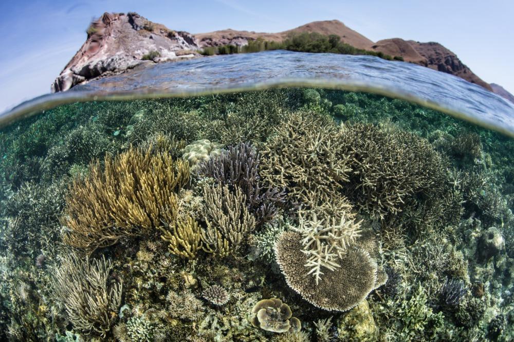 Coral-Reef-Underwater-Ocean